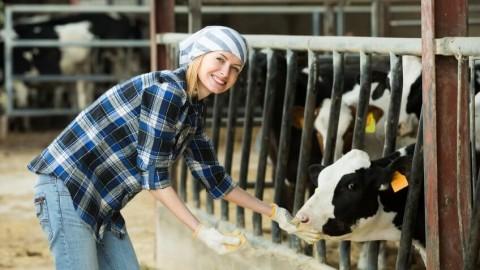 Mô tả nghề Kỹ sư chăn nuôi