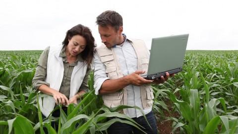 Mô tả nghề Kỹ sư trồng trọt