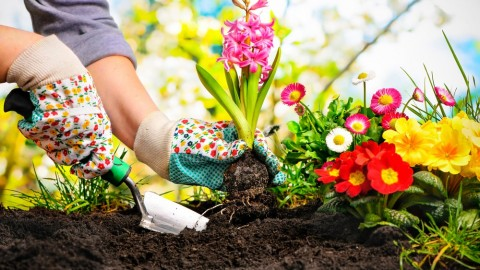 Mô tả vị trí nhân viên Nghiên cứu và phát triển giống cây trồng