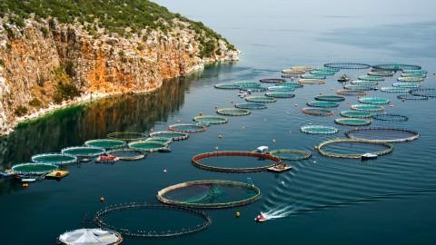 Mô tả nghề Nuôi trồng thủy sản